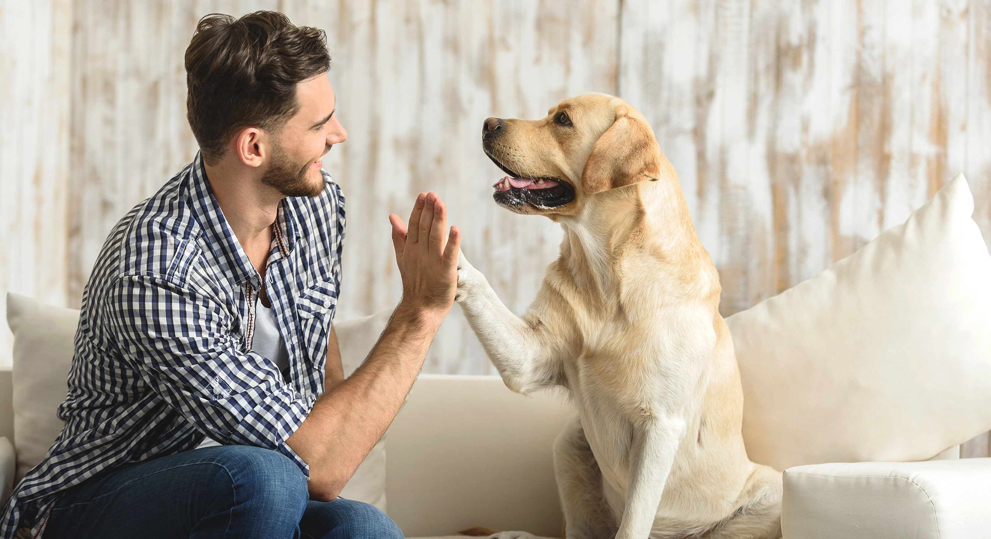 Entre as novas assistências da MAG Seguros está a proteção pet